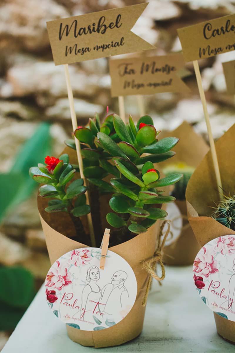 Plantas de regalo para los invitados