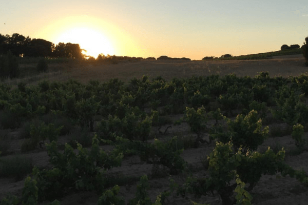 Francisco Barona - Ribera Del Duero - Spanish Wine Maker - Sunset