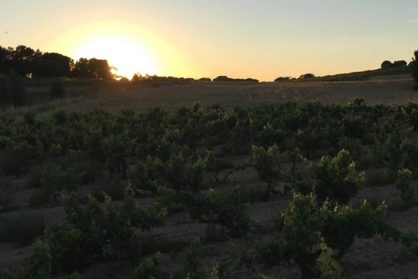 Francisco Barona - Ribera Del Duero - Viticultor Español - Atardecer