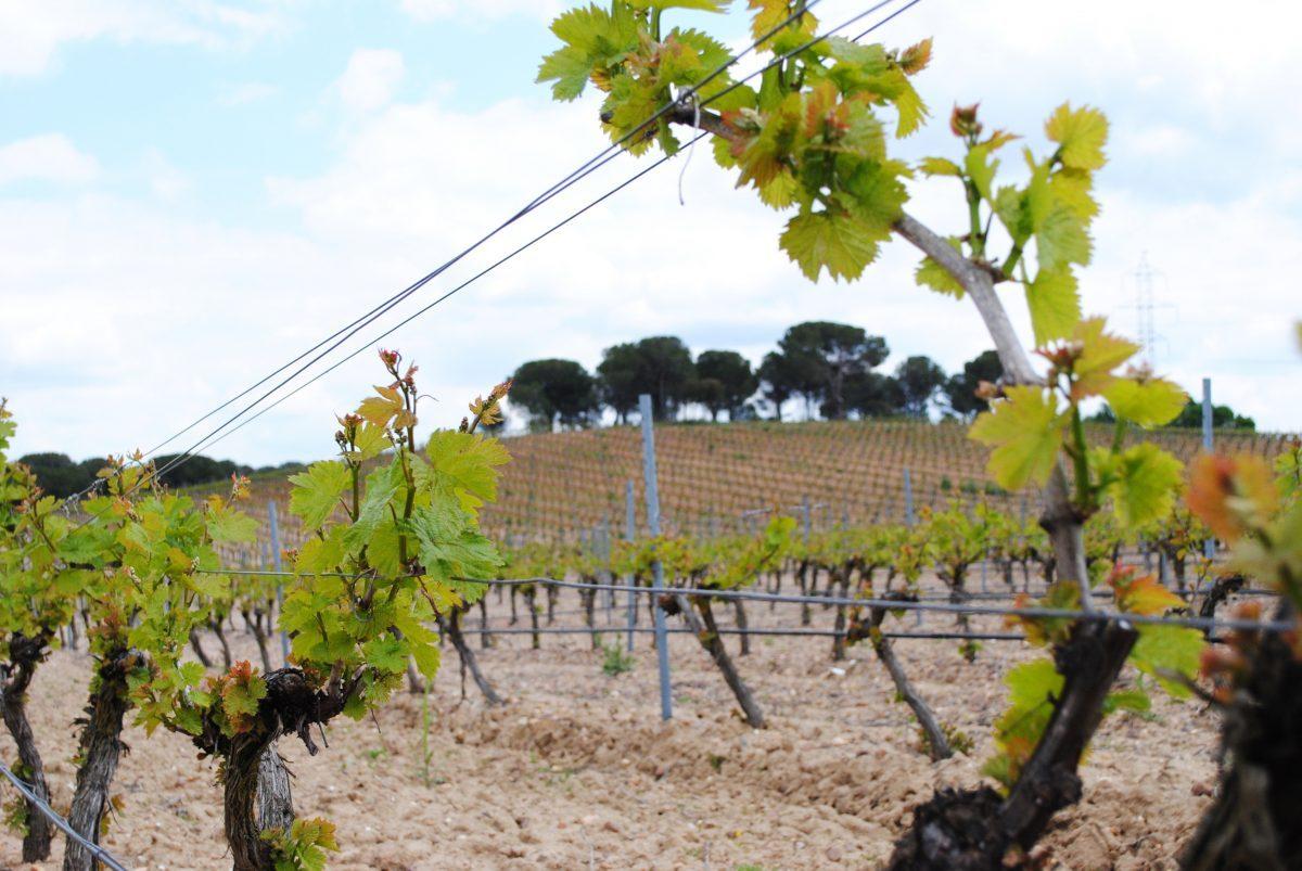 bodegas-javier-ruiz-vino-rueda-primavera-1