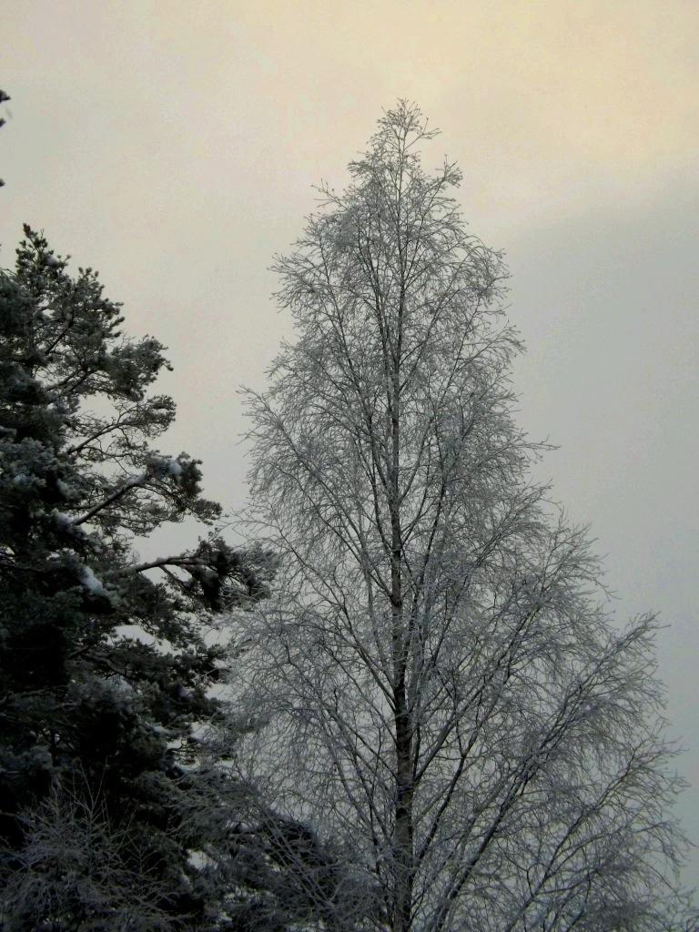 20121221-222826.jpg