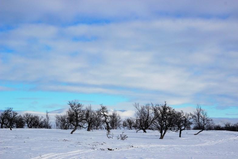 Fra skituren - utsikt over Rondane