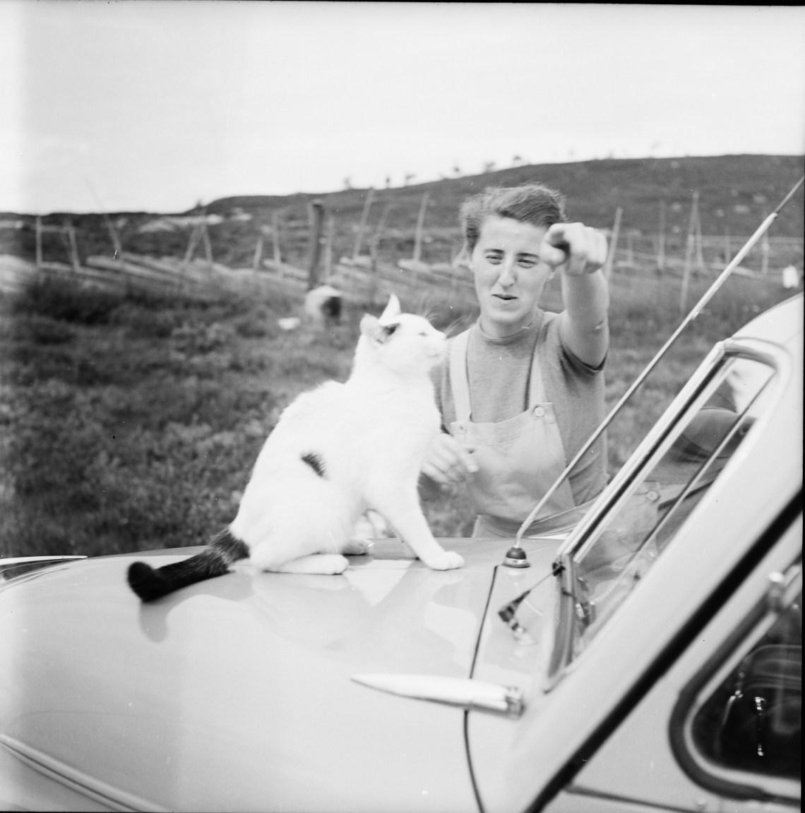 Bil og katt