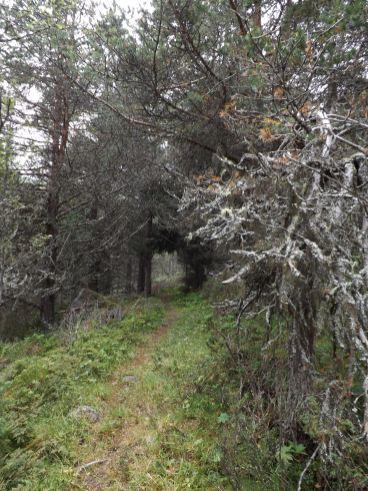 Porten inn til trollskogen