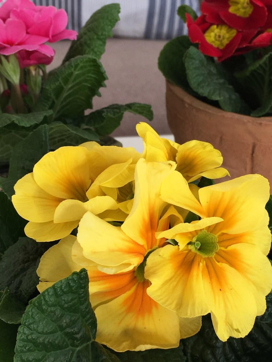 Vårlige blomster