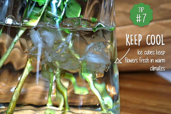 Keep-cut-flowers-fresher-for-longer-in-warm-climate-with-ice-cubes