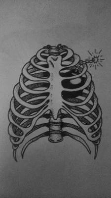 dessin-monkey-squeltte-cage-thoraxique