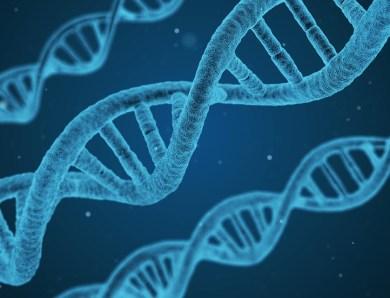 Anti-Aging – Forscher entdecken Schlüsselelement des natürlichen Alterungsprozess