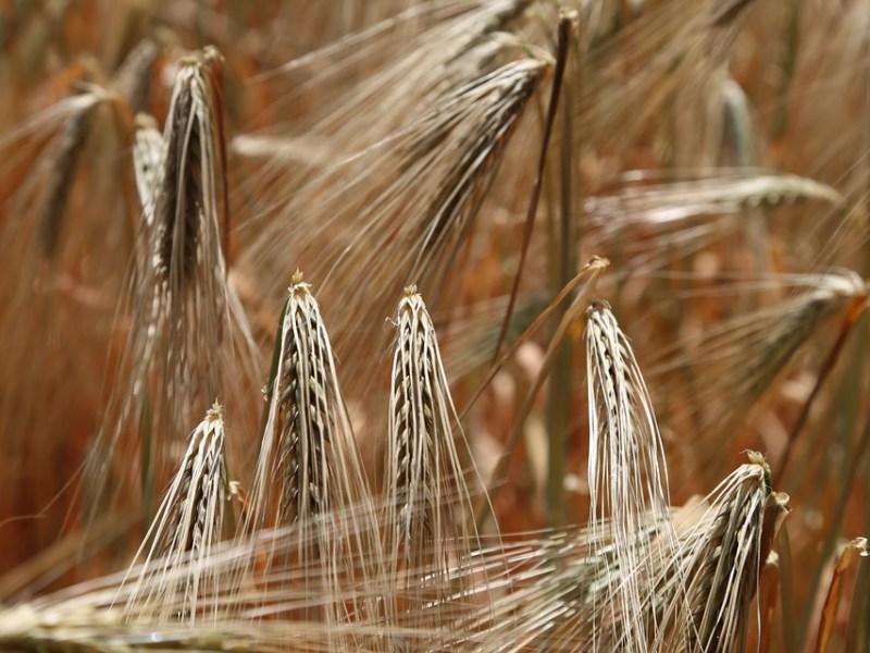 Glutenintoleranz – Wann sollte ich auf Getreideprodukte verzichten?