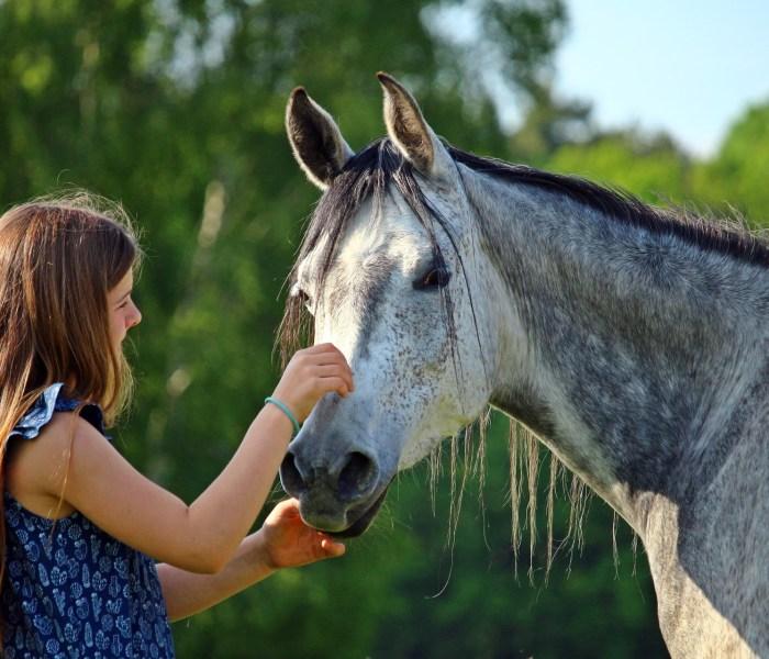 Tammy De Oliveira – Animal Eyes Telepathic Communication and Healing