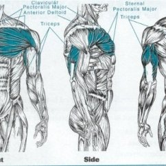 Pull Up Muscles Worked Diagram Pump Wiring Control Push And Bodybalance Exercises Draft Lens18699494module154203053photo 1318621260push