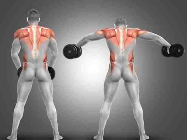 عضلات الكتف