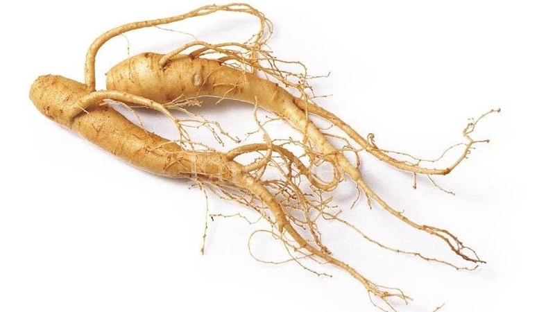 Ginseng Healthy For Liver