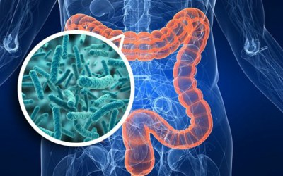 The Silent Microbiome Crisis