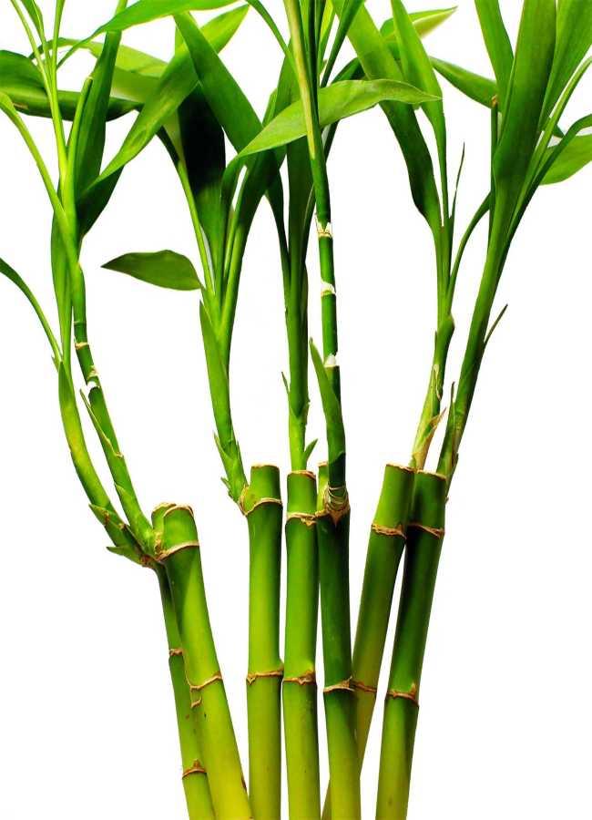 plants that bring positive energy