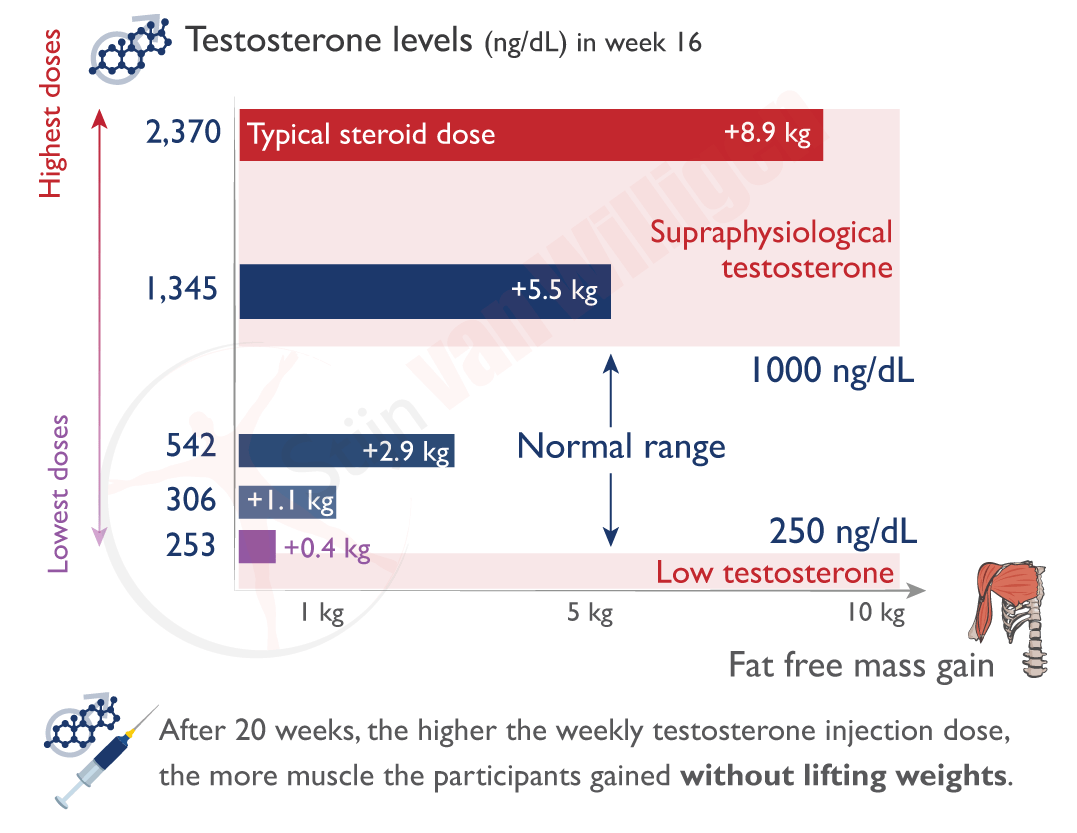 img-testosterone-muscle-growth