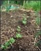 Keeping Organic Gardens Weed Free