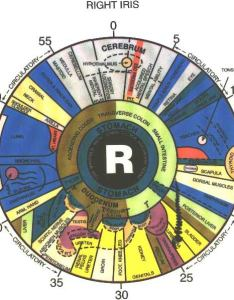 also iridology to determine potential health problems body peace rh bodypeace