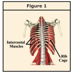 Diagram Of Rib Cage And Muscles 2001 Hyundai Elantra Engine Easing Myofascial Trigger Points In The Chest Body Principle You Might Even Experience Difficulty Breathing As Time Passes Infection Inflammation Subside But Shortness Breath May Persist Leave