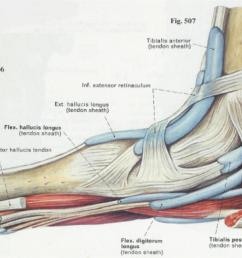 diagram of plantar fasciiti [ 1241 x 647 Pixel ]