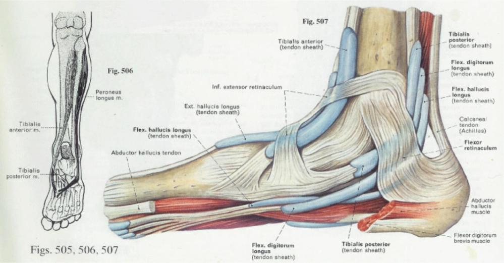 medium resolution of diagram of plantar fasciiti