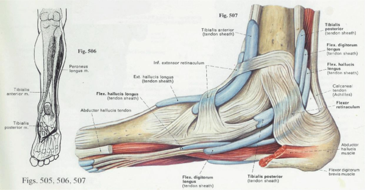 hight resolution of diagram of plantar fasciiti