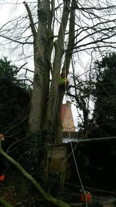 boom-verwijderen2