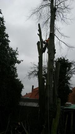boom-verwijderen5