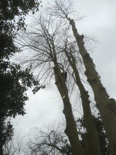boom-verwijderen6
