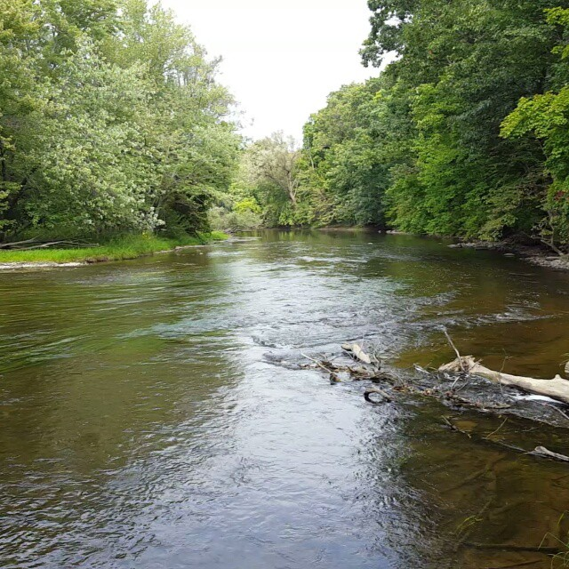 A peaceful moment on the Shiawassee River