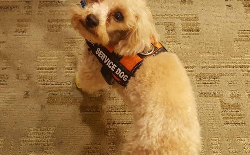 World's Tiniest Service Dog
