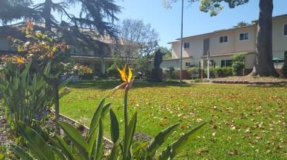 Carmelite Garden