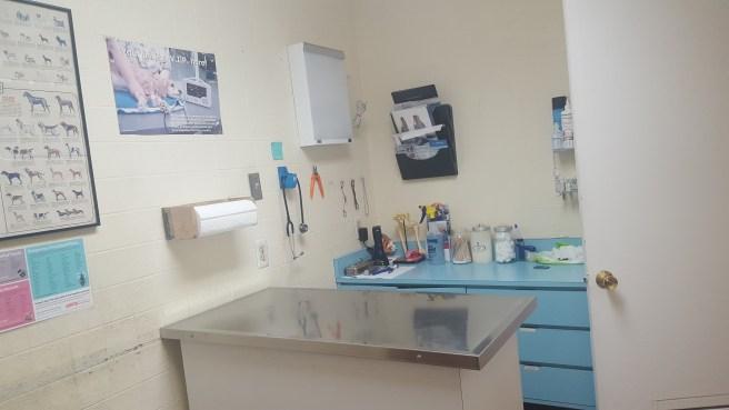 Best Care Pet Clinic exam room #1