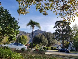 Wilson fire at 8:54am from my front yard. It's originating just behind the peak behind the palm tree.