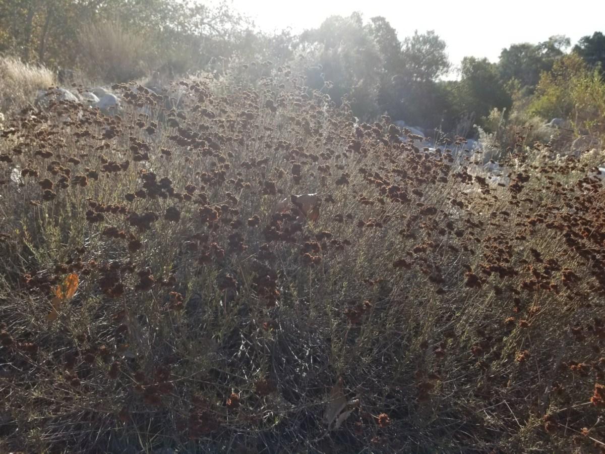 Checkin Eaton Canyon Hiking Trail