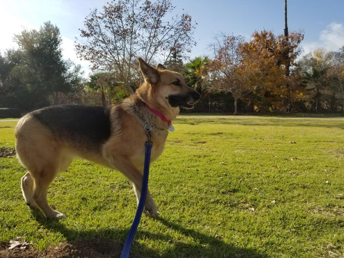 Checkin Alice Frost Kennedy Dog Park