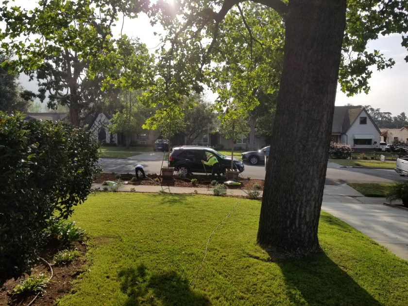 View of front yard where two guys are digging holes to plant two trees