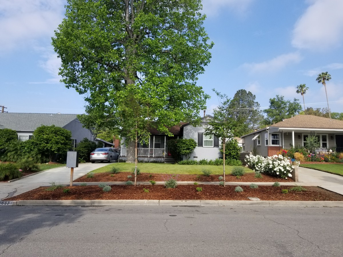 Photo of our house from the street featuring two new crepe myrtle trees