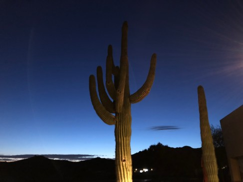 Big saguaro outside clubhouse looked cool pre-dawn.