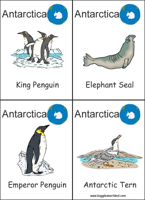 Penguin Tacky Worksheet Kindergarten