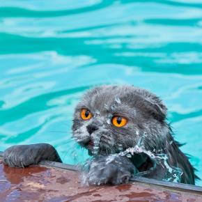 swimming cat 2