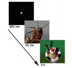 Figure 2 : Experimental Design