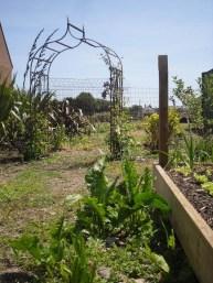 Community Garden June 2012 -- 12