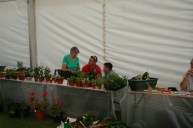 Town Show 2009_02