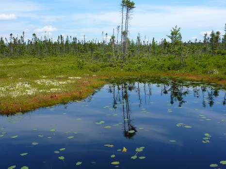 A photo of a bog - just for good measure!