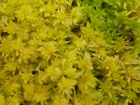 Peatland stable isotope analysis is mostly carried out on Sphagnum moss