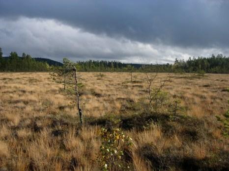 One of Matt's PhD field sites at Fagelmossen, Sweden