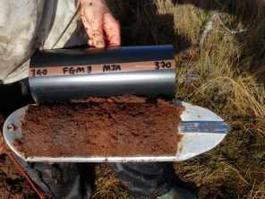 A core section of fresh Sphagnum peat from several metres below the surface