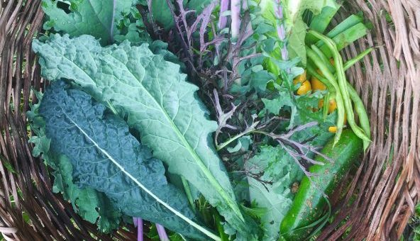 organic produce in bogota