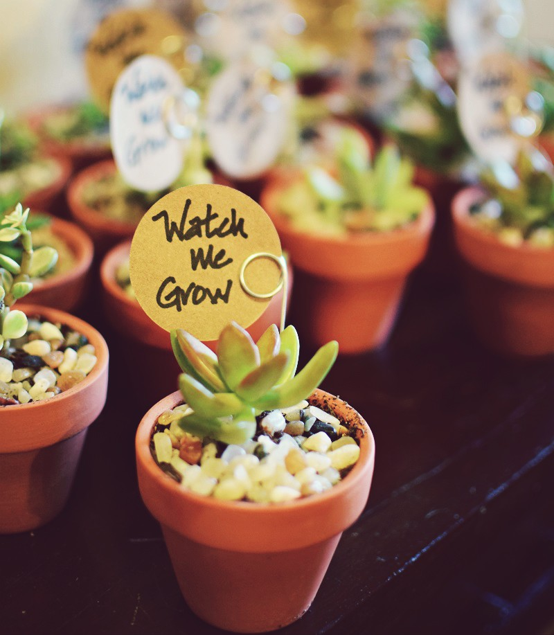 baby shower watch me grow succulent gift